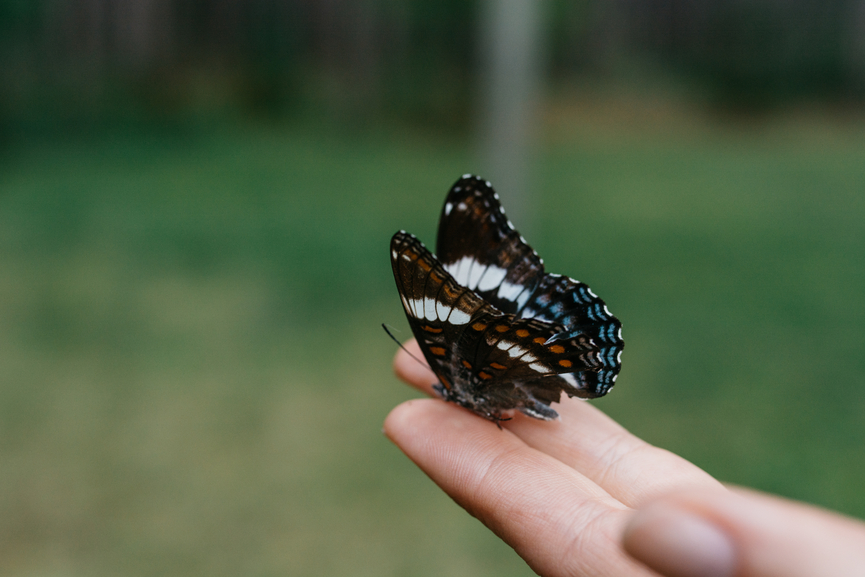 Woman holding butterfly on her hand